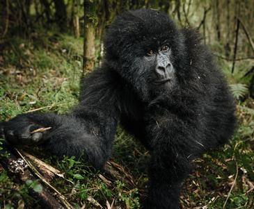 9 Days Self Drive Uganda Primates and Wildlife Tour
