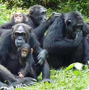 9 Days Primates and Wildlife Tour