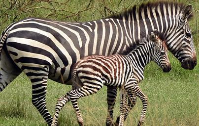 6 Days Wildlife Safari Tour on Self Drive